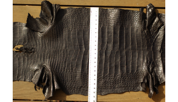 Black Alligator 52cm