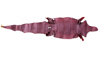 Maroon Alligator Leather 52cm